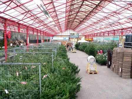 Kerstbomen kopen in enschede kom naar tuincentrum for Borghuis deurningen